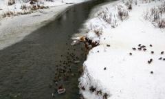 Река Вязьма зимой