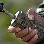 Вязьмичи вооружаются гранатами и тротилом