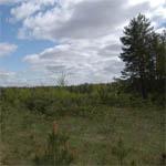 В Вяземском районе вдруг нашли 500 га пустой земли