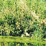 В вяземском районе 400 гектаров земель поражены сорняком