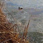В очередной раз обещают очистить реку Вязьму