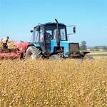 Куприянову лен будут выращивать бельгийские гастарбайтеры