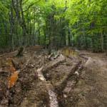 В лесах Вяземского района пропал местный житель