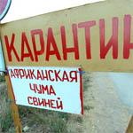 В Сычевском районе вспышка африканской чумы свиней