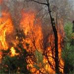 Вязьме присвоен четвертый класс пожарной опасности