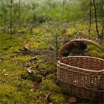Найдена пропавшая бабушка грибница
