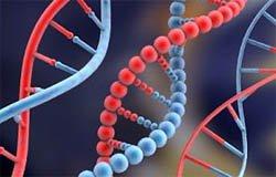 Вязьмич заплатил алименты только после анализа ДНК