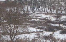 Началась вырубка загородного парка в районе МЖК - Березы