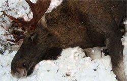 В вяземском районе пойман браконьер