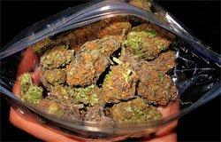 В Вязьме изъяли полтора килограмма марихуанны