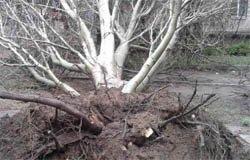 Ураган в Вязьме