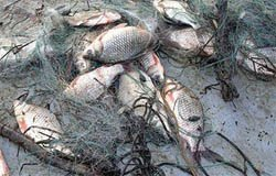 Рыбак из вяземского района может сесть на полгода