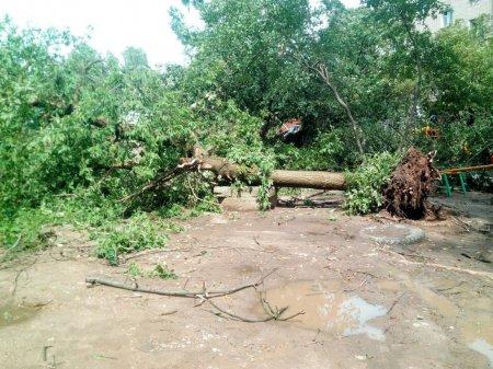 Ураган в Вязьме 21.06.16 фото
