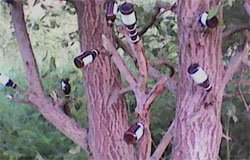Возле Троицкого собора украсили пустыми бутылками дерево