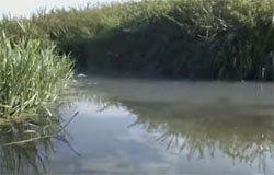 Река на века отправили обращение с целью проверки загрязнения реки Вязьма
