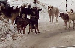Бездомных животных в Вязьме отловят специалисты