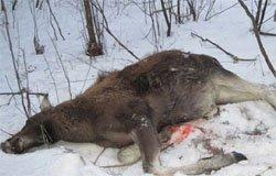 В Вязьме полиция задержала браконьера
