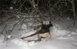 В вяземском районе задержан браконьер