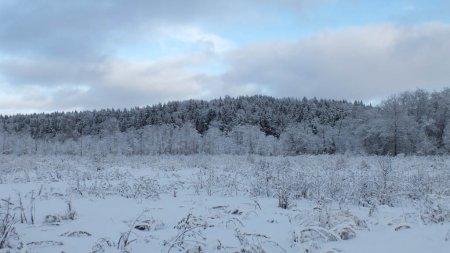 Лыжный поход Тёмкино - Вязьма фото и видео