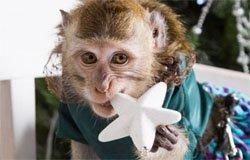 Выставка живых экзотических животных пройдет в Вязьме