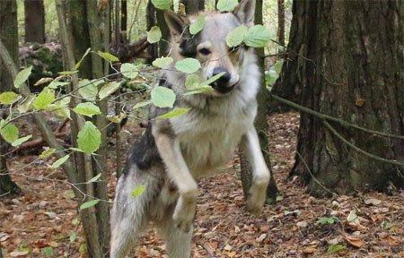 Хозяева вывезли в лес умирать свою собаку