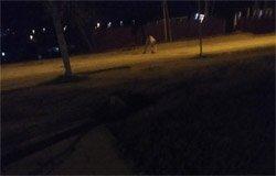Жители Вязьмы самостоятельно заделывают демидовские дороги