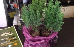 В кафе «Чайная» вернули украденные деревья