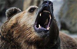 Рядом с Андрейково бродят медведи