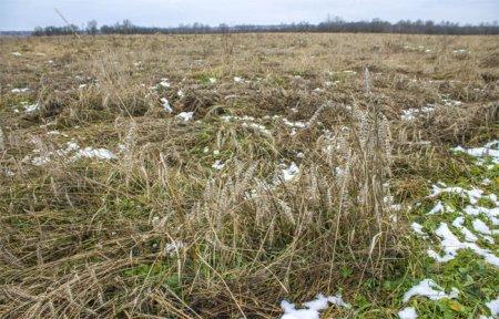 Уборка льна в Вяземском районе позорно провалилась