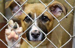 Приют для бездомных животных открывается в Вязьме