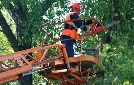 ООО «Наш дом» спилит деревья по 5 тыс за штучку