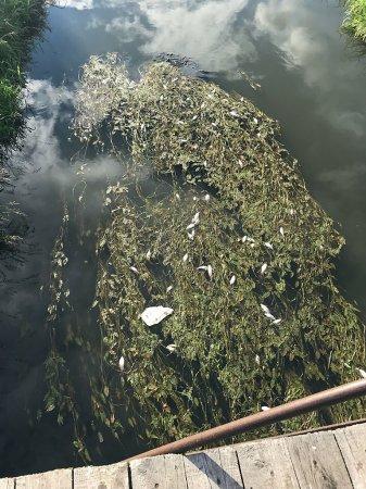 В реке Вязьма погибает рыба