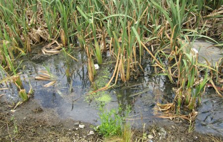 В Андрейково обнаружен ещё один источник загрязнения реки