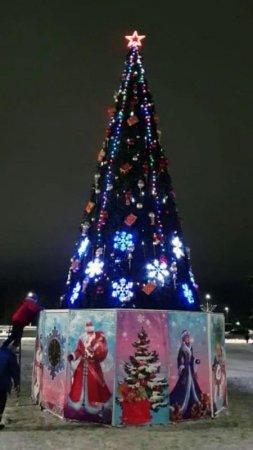 В Вязьме установили главную елку города
