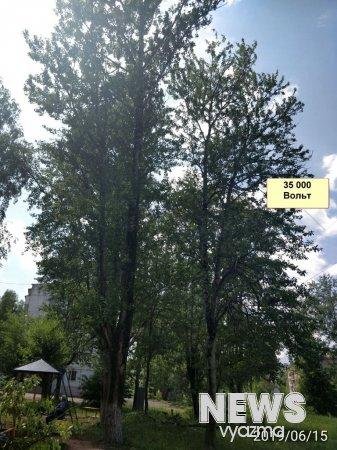 Жителей Московской беспокоят деревья возле высоковольтной линии