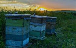 У жительницы Вяземского района украли ульи с пчелами