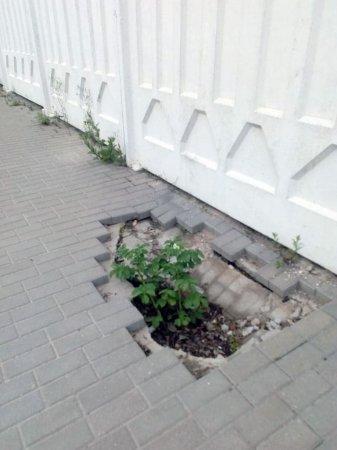 В дырах вяземских тротуаров начали выращивать картошку