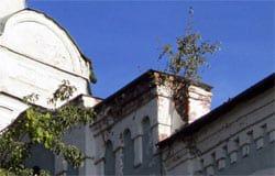 На здании Вяземской епархии выросла береза