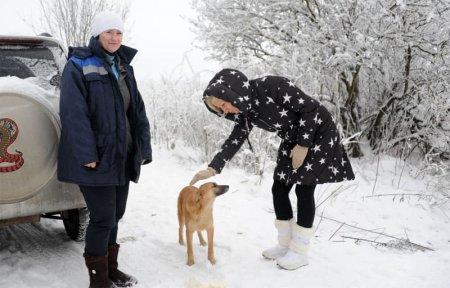 Администрация Вязьмы поддержит приют для собак Дом добра