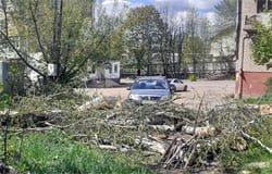 Распилили, бросили: администрация не в состоянии убрать спиленные деревья