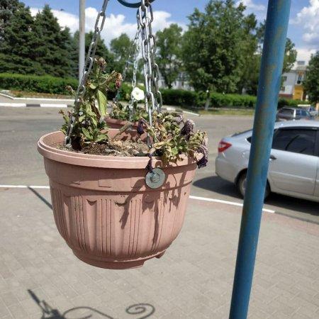 Вязьма - город сад