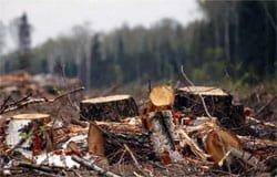 Под Туманово выявлена незаконная вырубка леса