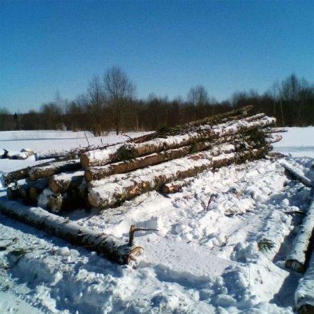 В Хмелите вырубают лес