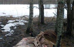 Охота у Нахимовских могил