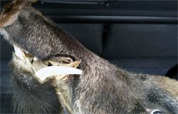 На 201-м км М-1 задержан водитель с окровавленной головой в багажнике