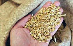 Вязьмичка купила за 30 тыс. рублей несуществующее зерно