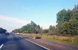 На 229-м км трассы М1 Рено сбил лося